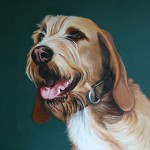 Hundeportrait Kopfportrait