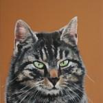 Katzenportrait