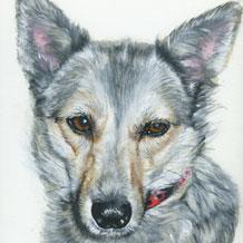 Hundeportraits